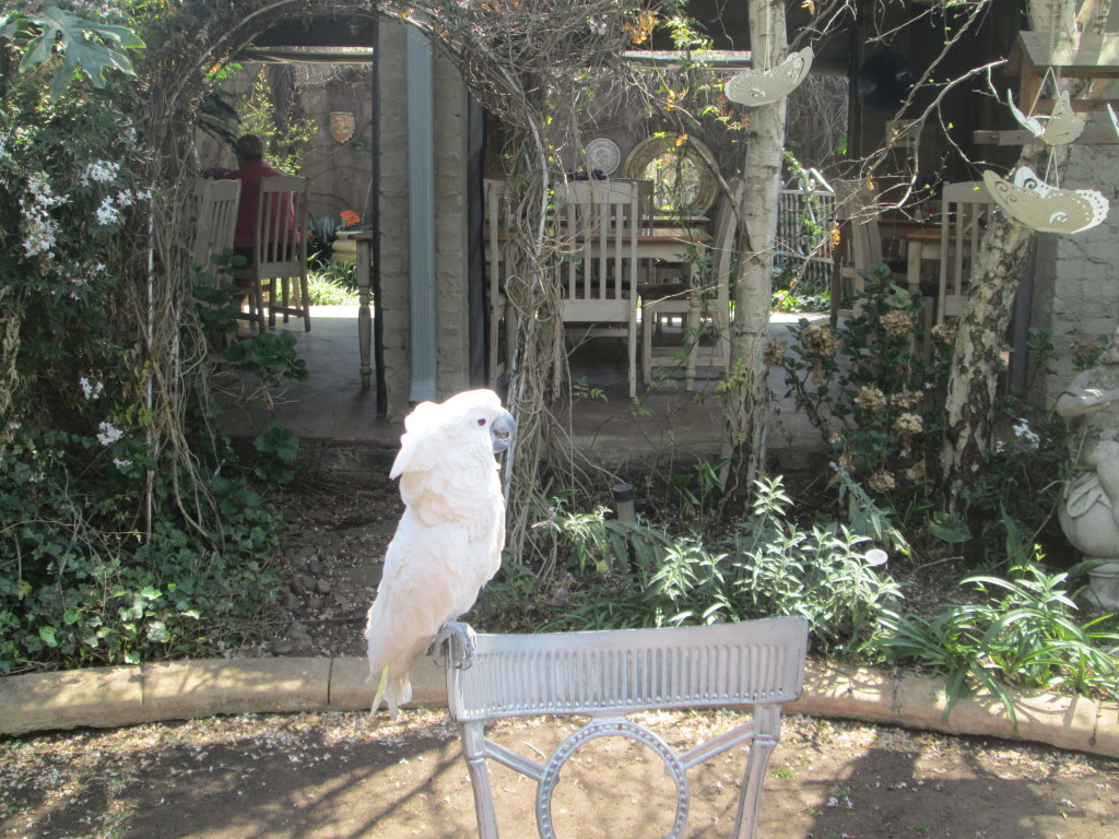 arum-symphony-parrot-on-chair