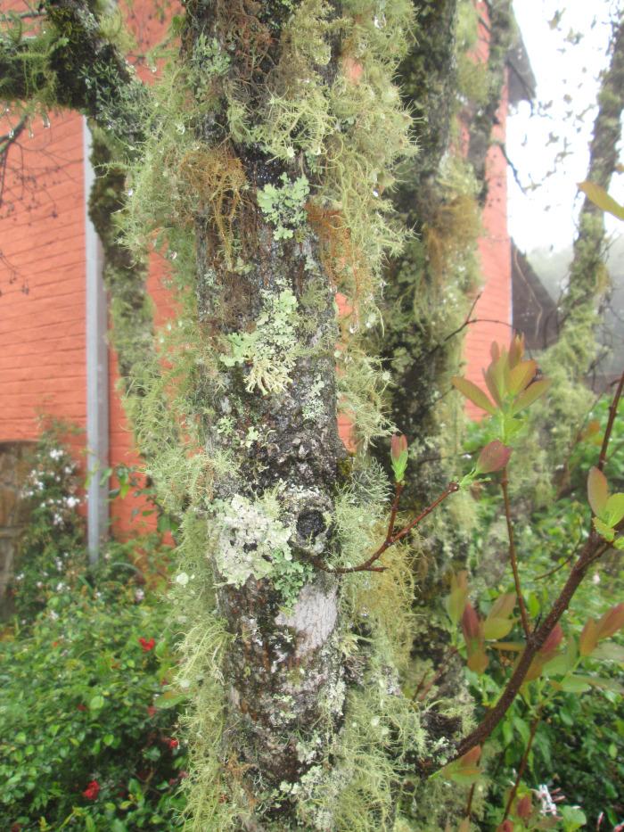 misty mountain moss on tree