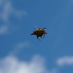 Oribi Gorge Spider