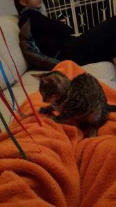 kitten with ribbons