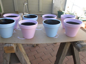 Pots painted and ready for the pary