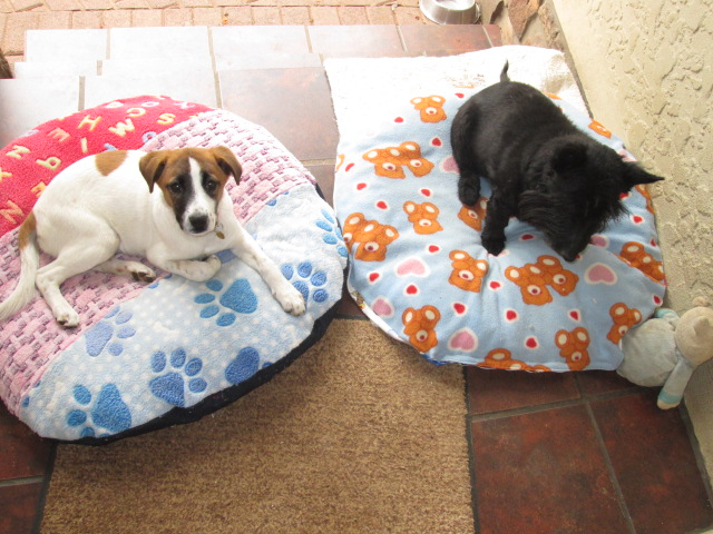 Happy on their new cushions