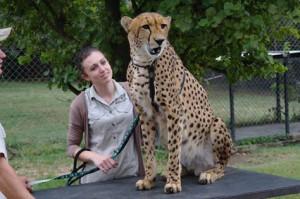 cheetah moholoholo