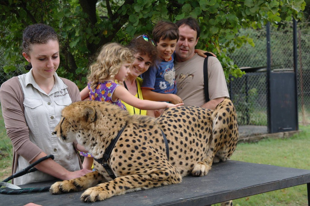 family with cheetah at Moholholo