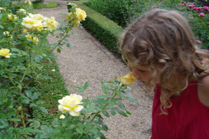 smell roses