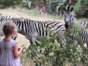 Stainbank Nature reserve zebra