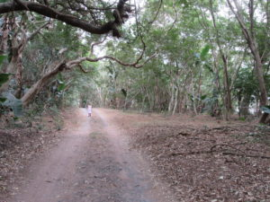 Stainbank trail