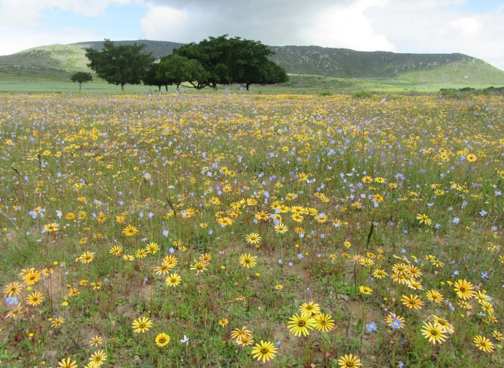 OUDEPOST WILDFLOWER RESERVE IN DARLING