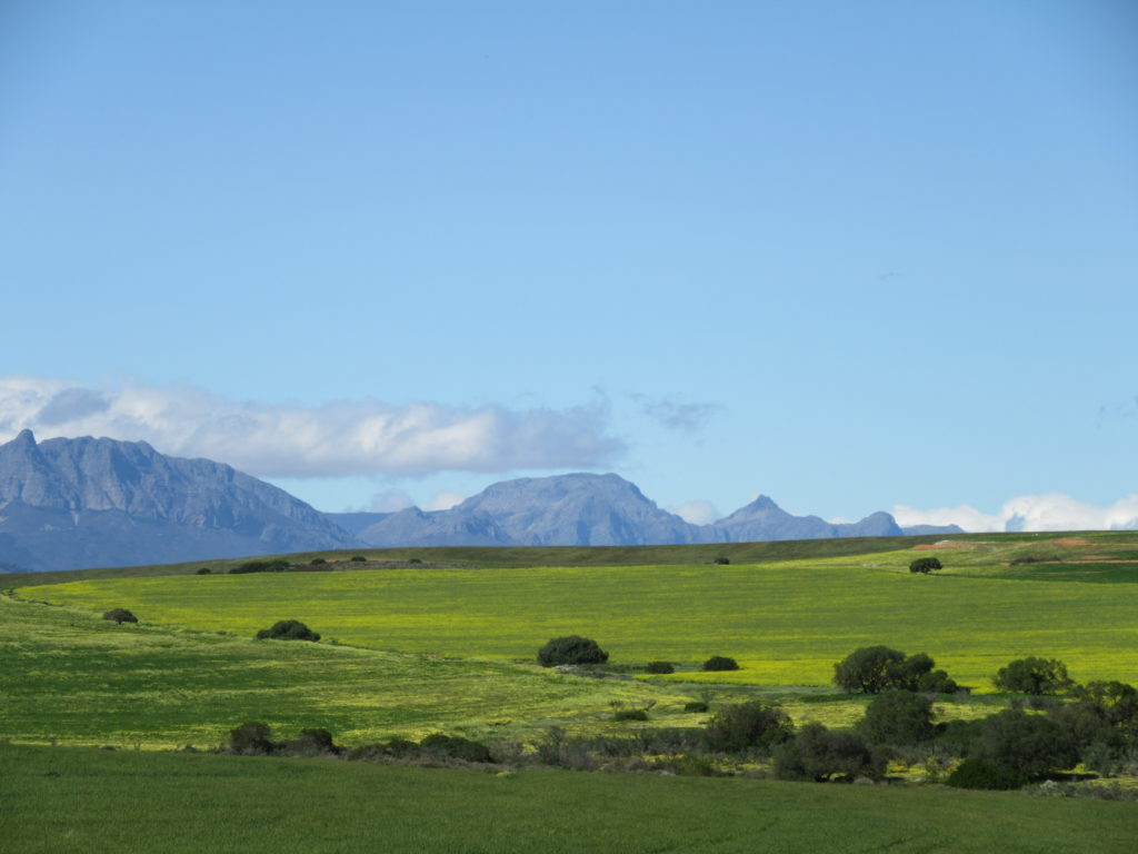 Near Hermon on R44 from Cape Town to Clanwilliam