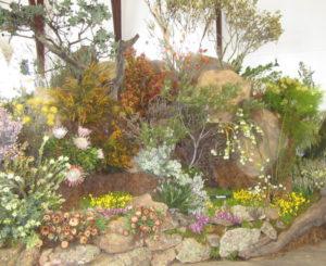 flower show proteas