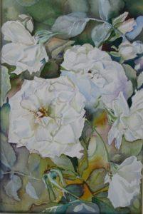 iceberg-roses-31-x-21-r950