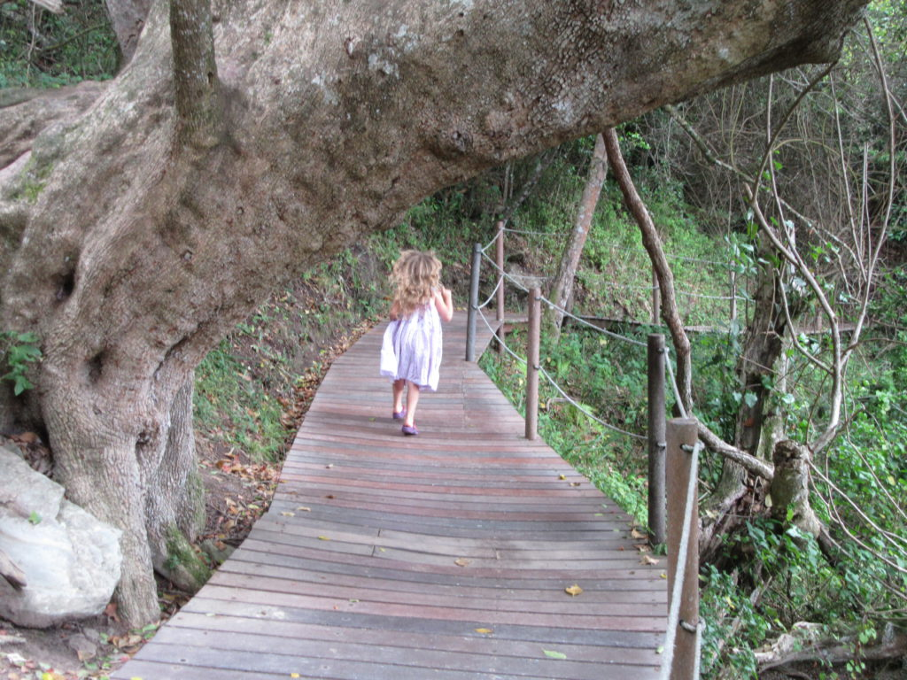 acacia-on-boardwalk