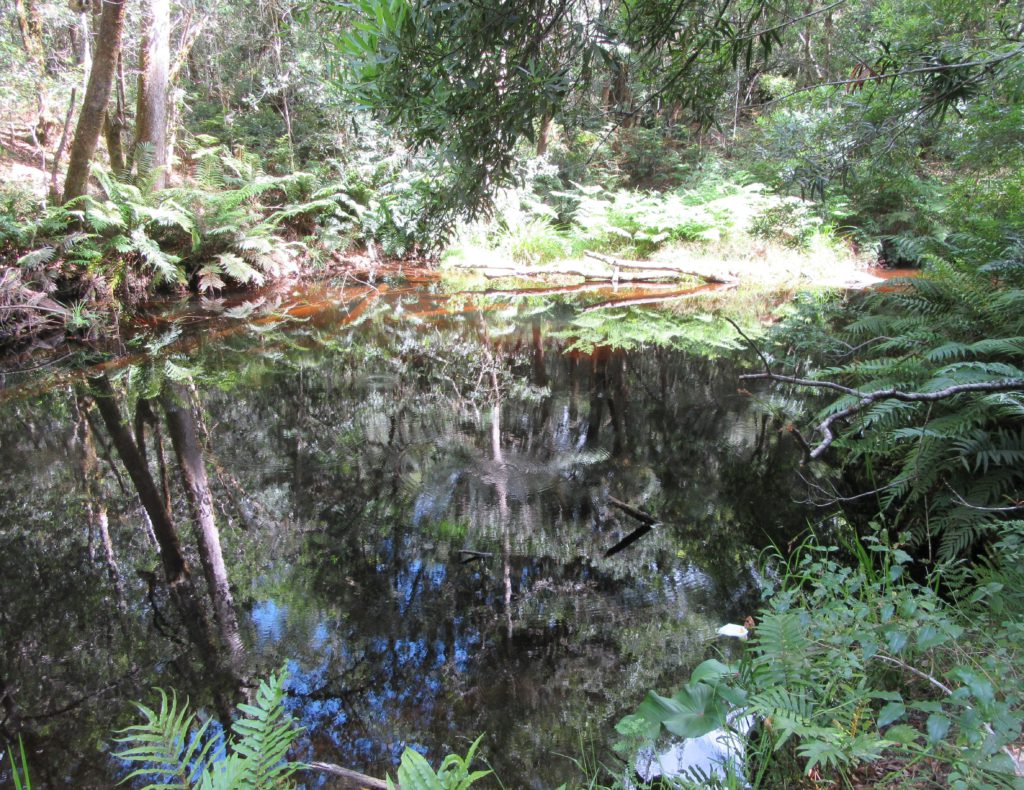 Knysna forest the space in the circle between reality and reflection